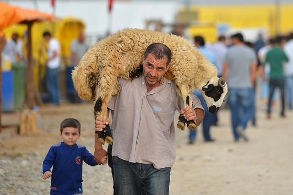 """ANKARA, TURKEY - SEPTEMBER 23: A man carries a sheep on his shoulders at a livestock market ahead of the Muslim sacrificial festival """"Eid al-Adha"""" in Ankara, Turkey on September 23, 2015. (Photo by Mustafa Kamaci/Anadolu Agency/Getty Images)"""
